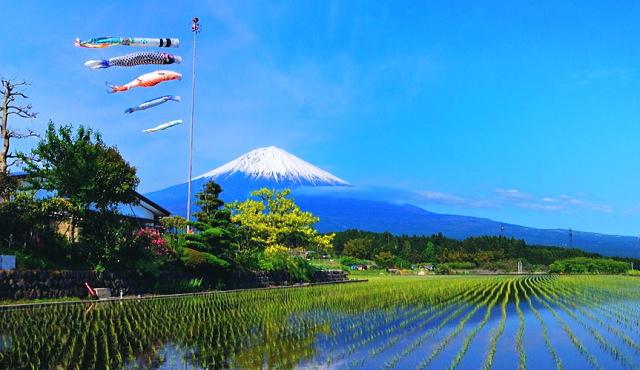 koinobori Mt Fuji