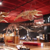 🇬🇧 The subsoil of the Iwaki region contains some very, very old treasures, gathered in a museum dedicated to: the old coal mining and the dinosaurs! 🐲 Discover for example the longest complete dinosaur skeleton in Asia! 😱 The town of Yumoto, where the museum is located, is also famous for its onsens! 🇫🇷 Le sous-sol de la région d'Iwaki renferme des trésors très très anciens, réunis en un musée consacré à : l'ancienne exploitation du charbon et aux dinosaures !🐊 Découvrez-y par exemple le plus long squelette de dinosaure complet d'Asie ! 😨 La ville de Yumoto où se situe le musée est également réputée pour ses onsens ! ♨ . #Iwaki #Dinosaur #Dinosaure #Trex #onsen #Japan #Japon #Fukushima @Japan_Wonder_Travel #JapanWonderTravel