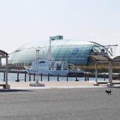 🇬🇧 The Aquamarine museum in Iwaki, for the pleasure of children and adults! 🐠 🇫🇷Le musée Aquamarine à Iwaki, pour le plaisir des petits et des grands ! 🐟 . #Iwaki #Aquarium #Japan #Japon #Fukushima #HopeFukushima @Japan_Wonder_Travel #JapanWonderTravel #japaneselife #japanstyle #visitjapan #japan_photo_now #igjapan