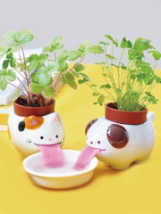 Plantes Animaux Peropon